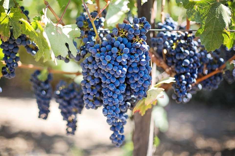 Investir dans un vignoble